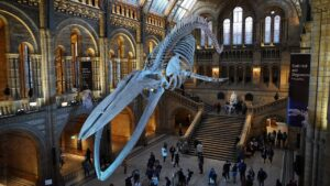 TOP 5 MUSEUMS IN LONDON TO VISIT : (Things Not to Miss)